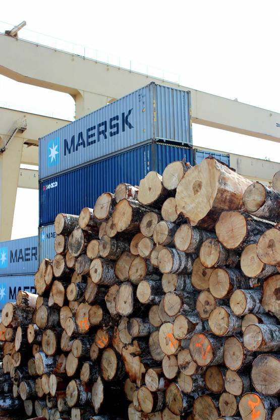 Buying timber in port of Riga