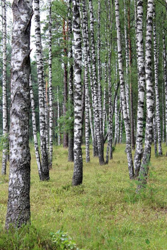 Forest purchase and management